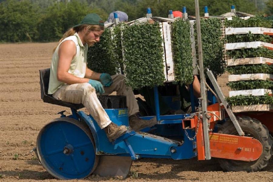 Iris bio il contadino e il libero mercato iris bio for Trapianto pomodori