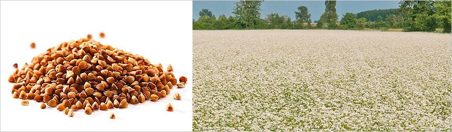 prodotti-agricoli-grano-saraceno